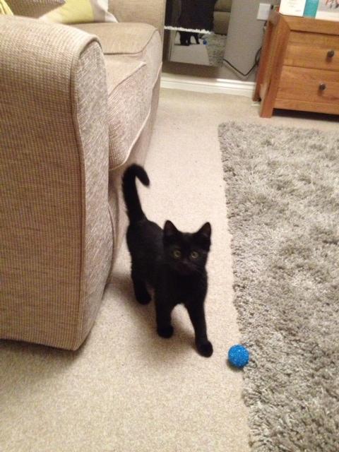 Spud Kitten