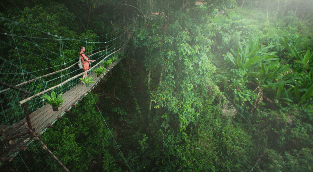 Girl Crossing Bridge in Costa Rica Forest Setting in a Rain Forest